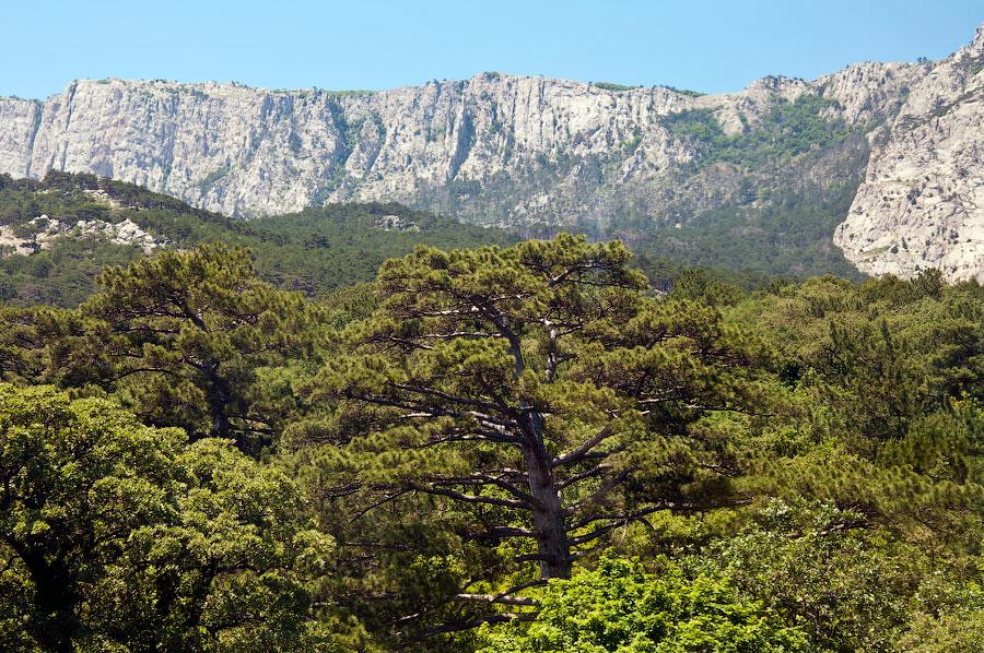 На вершине горы Ай-Петри (16)