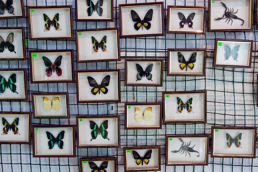 Про крымских бабочек (16)
