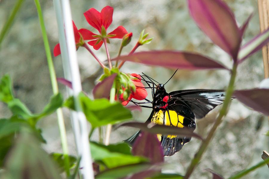 Про крымских бабочек (15)