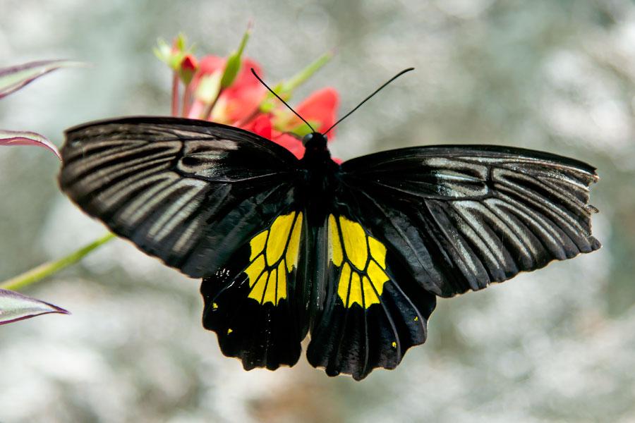 Про крымских бабочек (14)