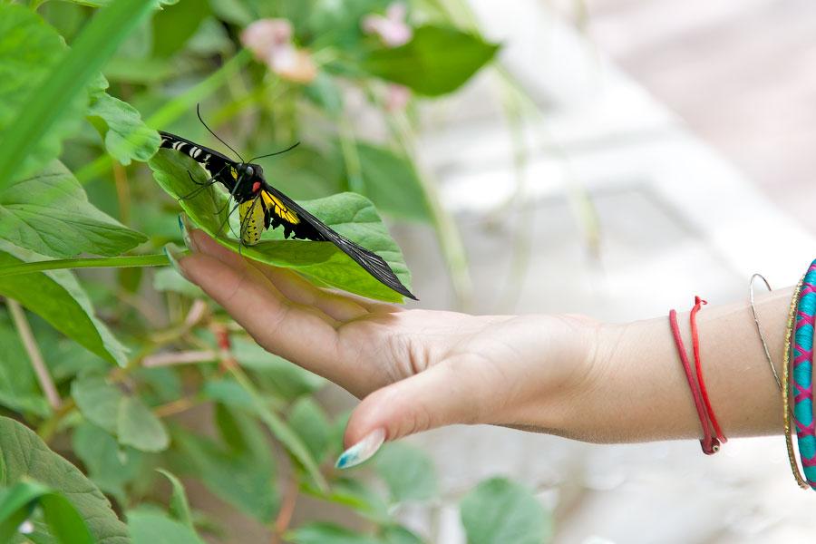 Про крымских бабочек (13)