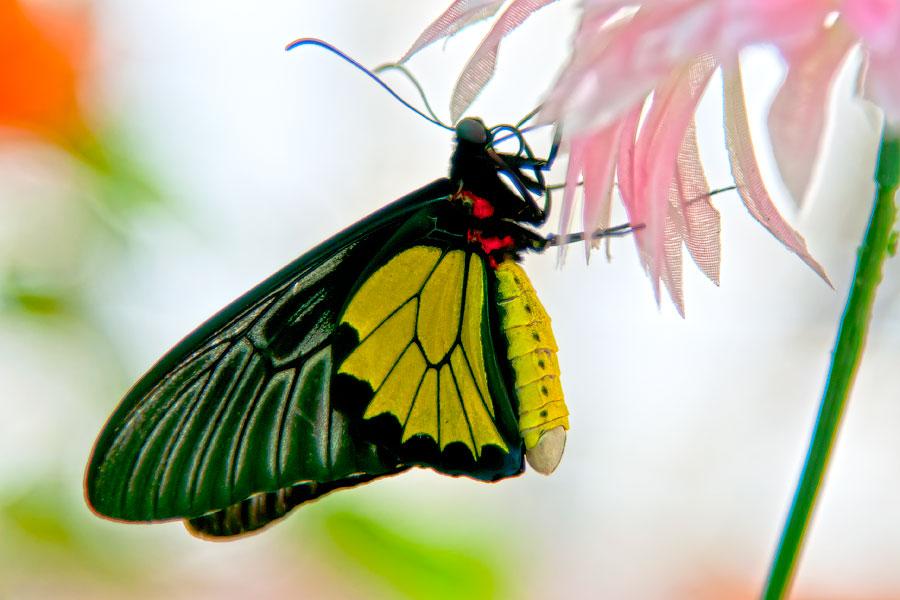 Про крымских бабочек (11)