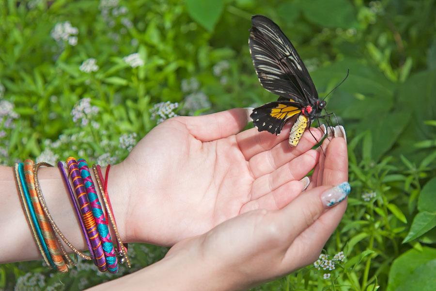 Про крымских бабочек (10)