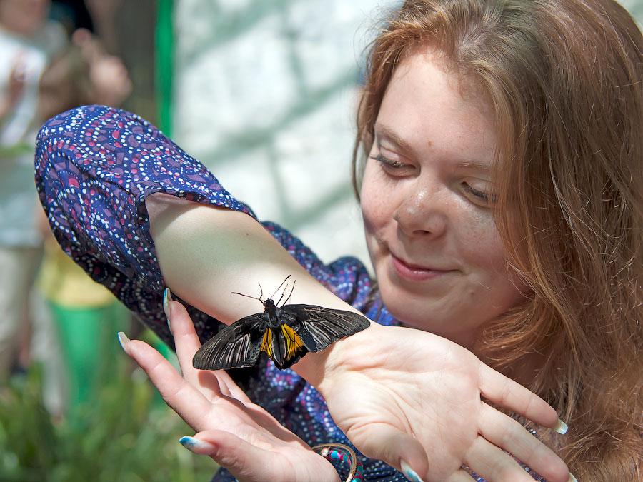 Про крымских бабочек (8)