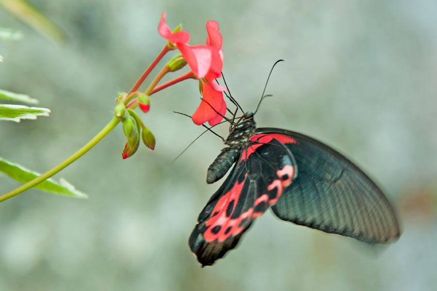 Про крымских бабочек (7)