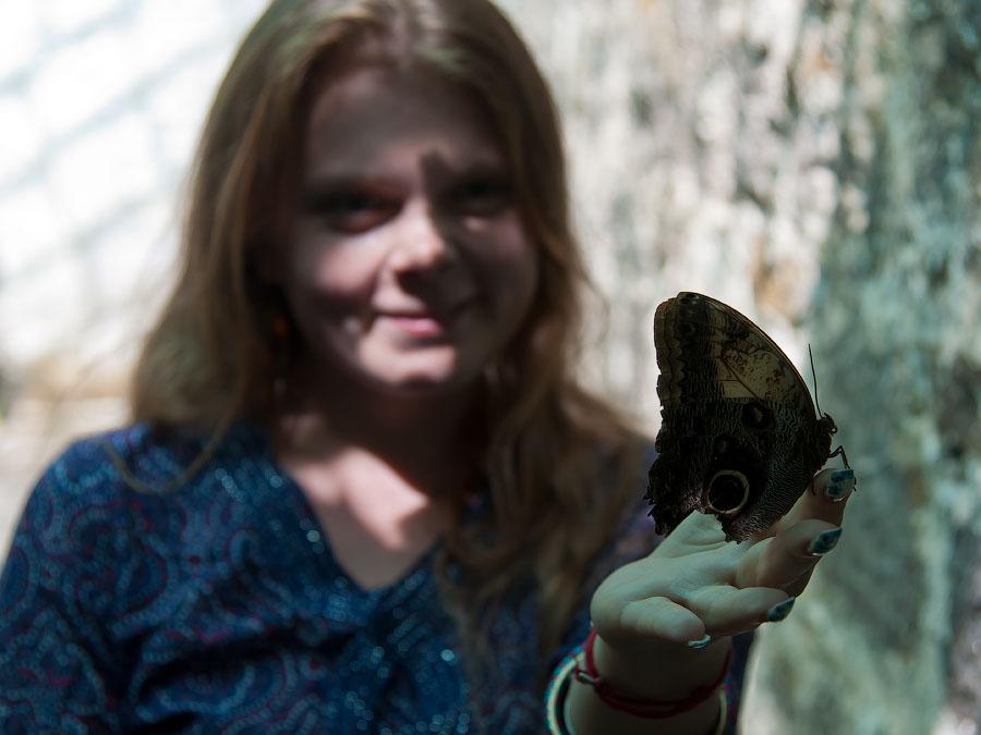 Про крымских бабочек (6)