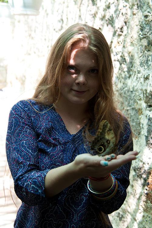Про крымских бабочек (5)