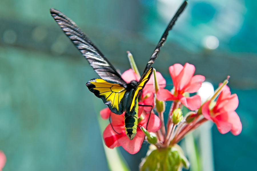 Про крымских бабочек (4)