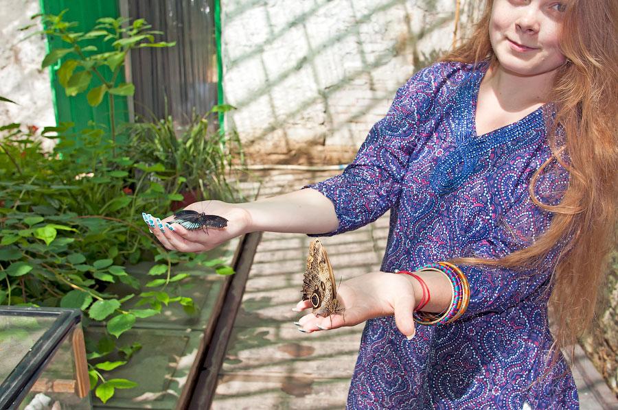 Про крымских бабочек (3)