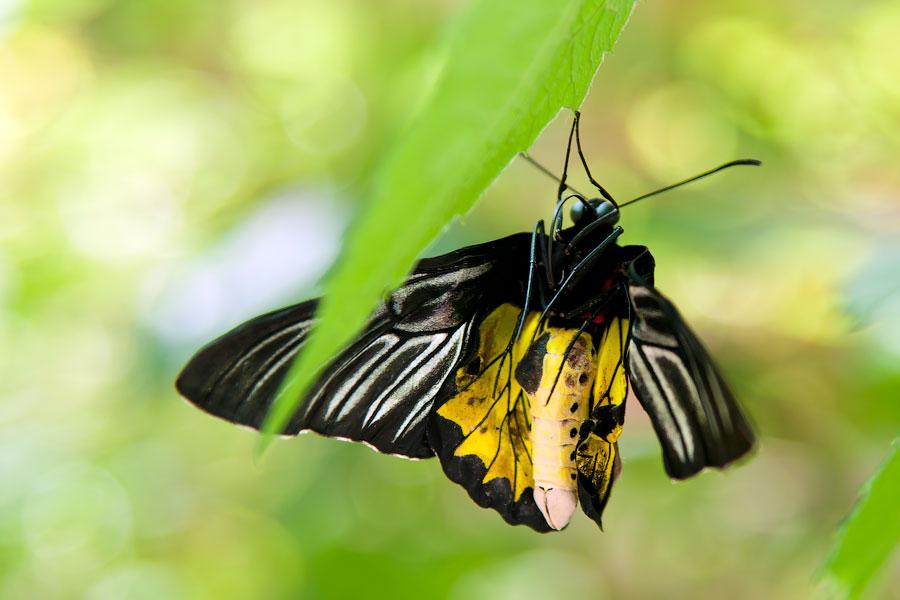 Про крымских бабочек (2)