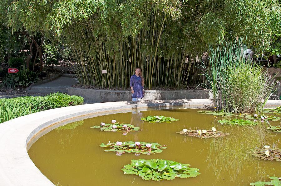 Никитский ботанический сад (17)