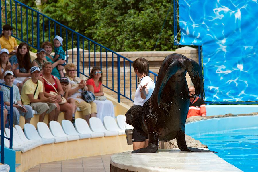 """Театр морских животных """"Акватория"""" - Ялта (12)"""