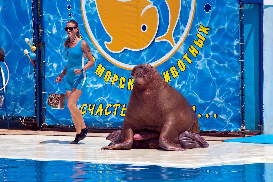 """Театр морских животных """"Акватория"""" - Ялта (16)"""