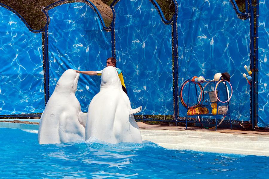 """Театр морских животных """"Акватория"""" - Ялта (23)"""