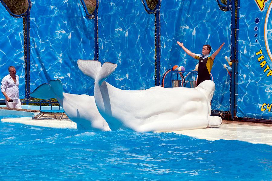 """Театр морских животных """"Акватория"""" - Ялта (38)"""
