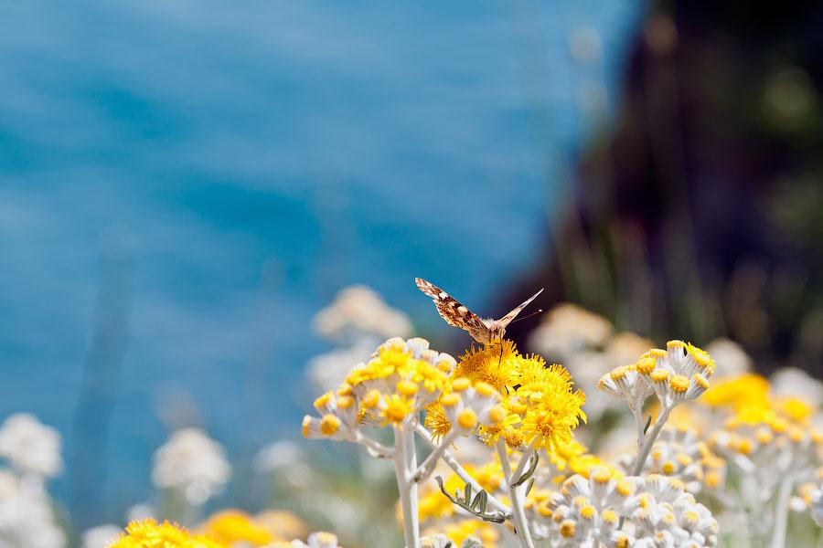 Морская прогулка от Ялты к Ласточкиному гнезду (38)
