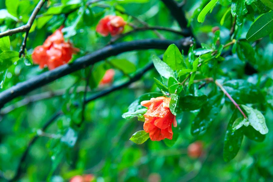 Дождливый день в Ялте (7)