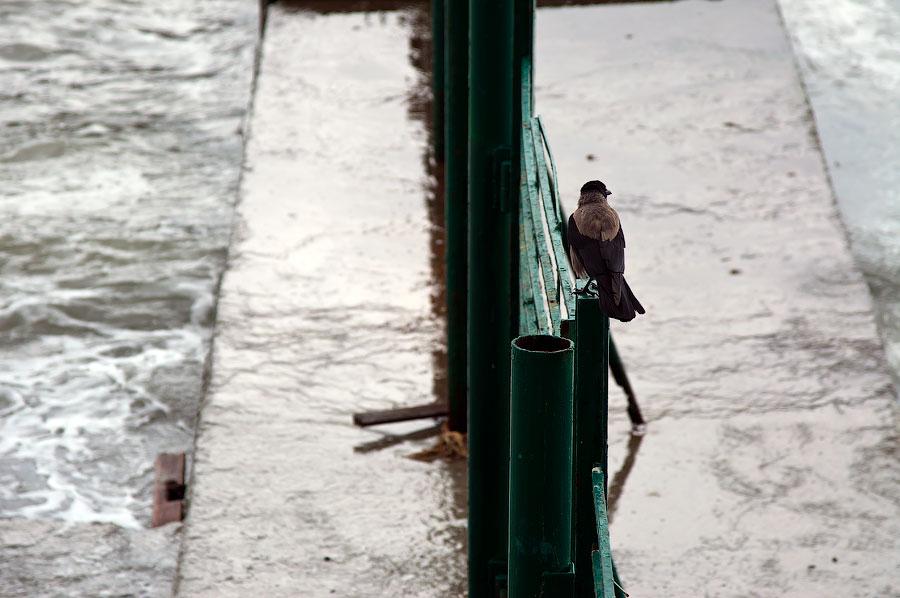 Дождливый день в Ялте (30)
