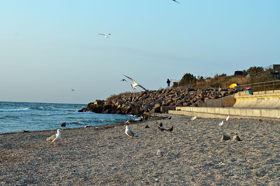Чайки на пляже Ильичёвска