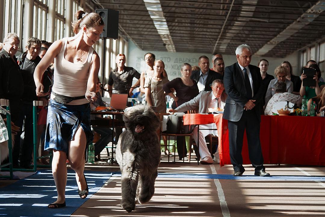 Международная выставка собак в Тирасполе - 8 сентября 2013 года (8)