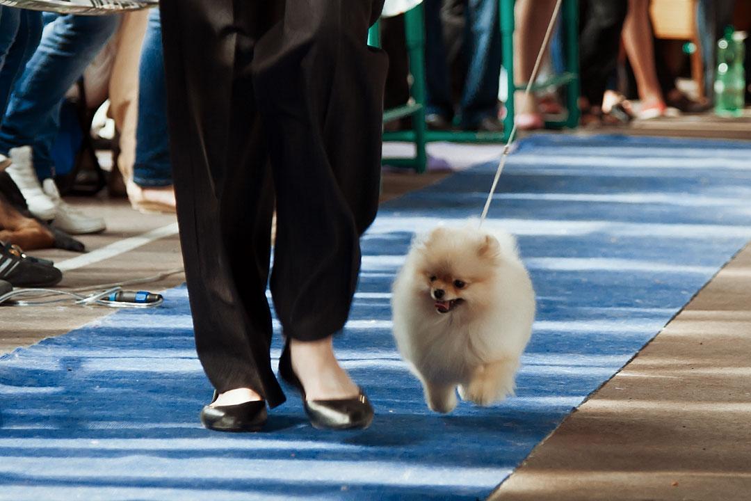 Международная выставка собак в Тирасполе - 8 сентября 2013 года (9)