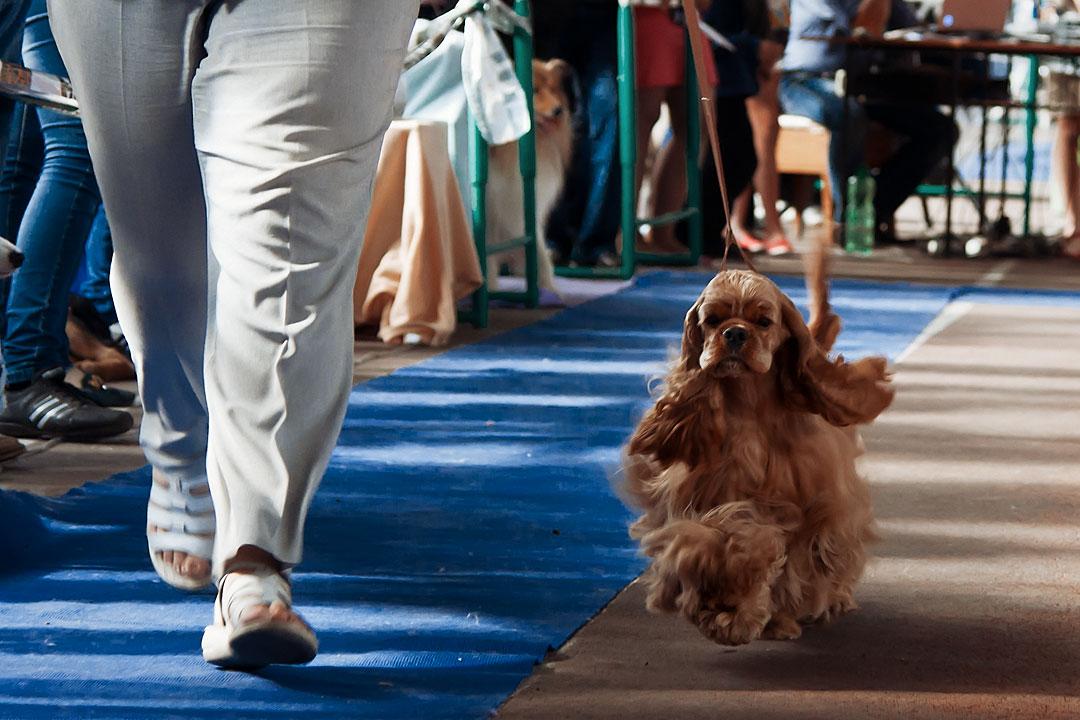 Международная выставка собак в Тирасполе - 8 сентября 2013 года (10)