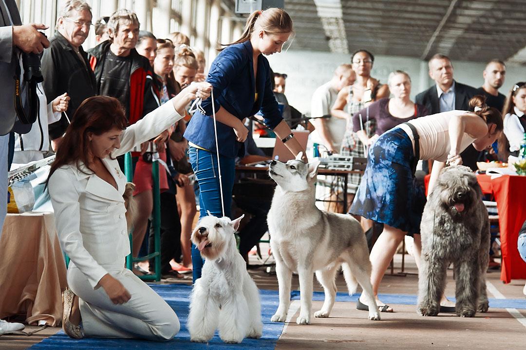Международная выставка собак в Тирасполе - 8 сентября 2013 года (11)