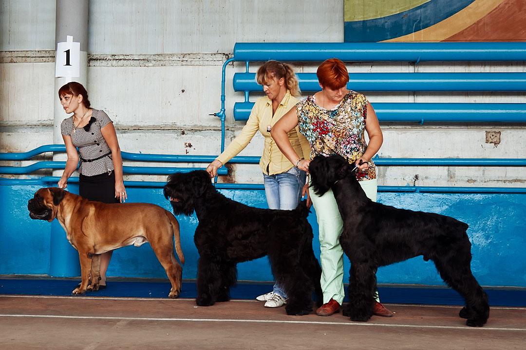 Международная выставка собак в Тирасполе - 8 сентября 2013 года (13)
