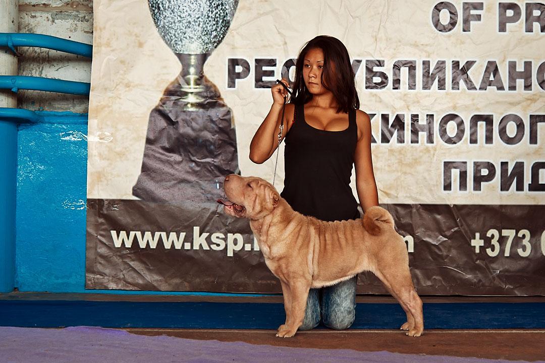 Международная выставка собак в Тирасполе - 8 сентября 2013 года (14)