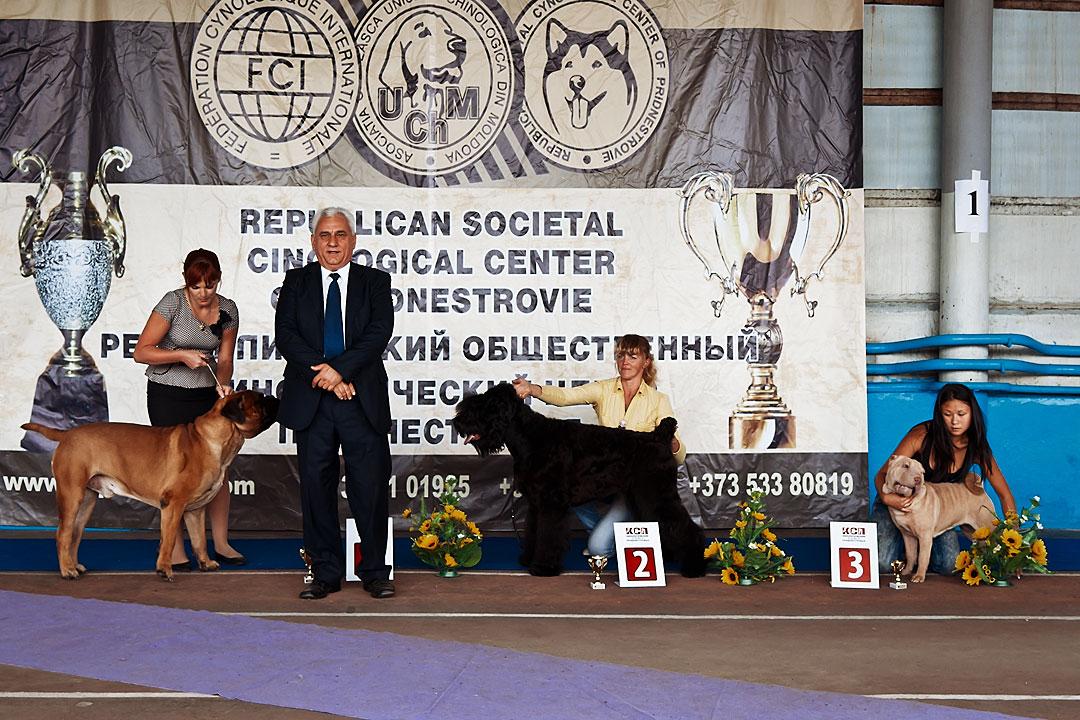 Международная выставка собак в Тирасполе - 8 сентября 2013 года (15)