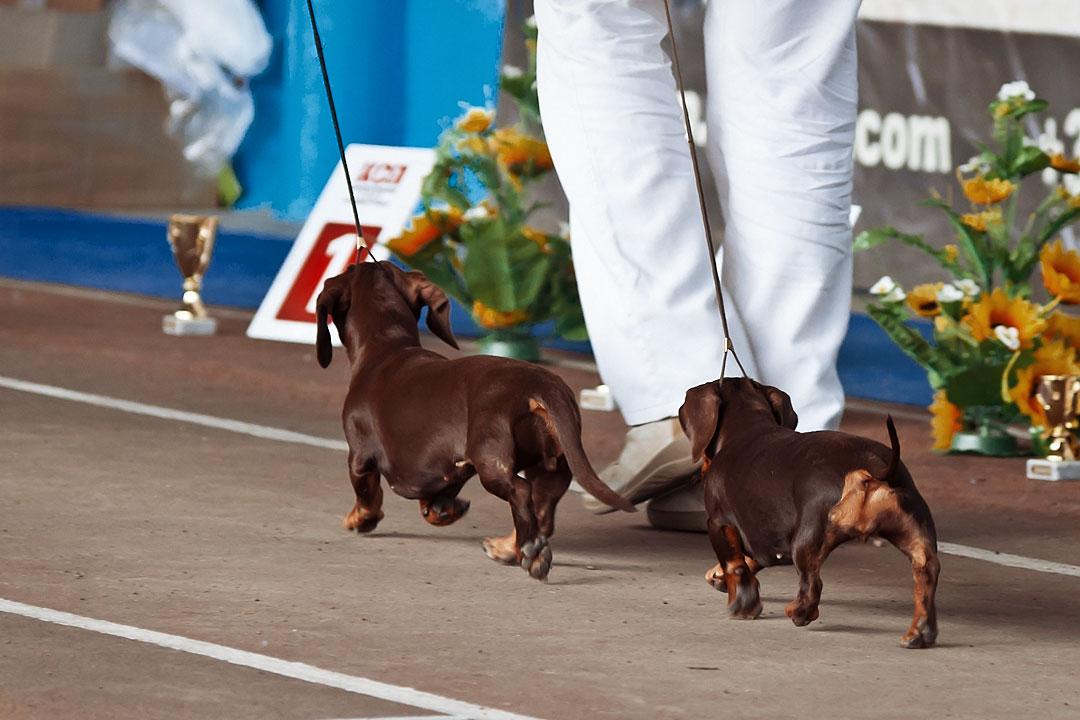 Международная выставка собак в Тирасполе - 8 сентября 2013 года (16)