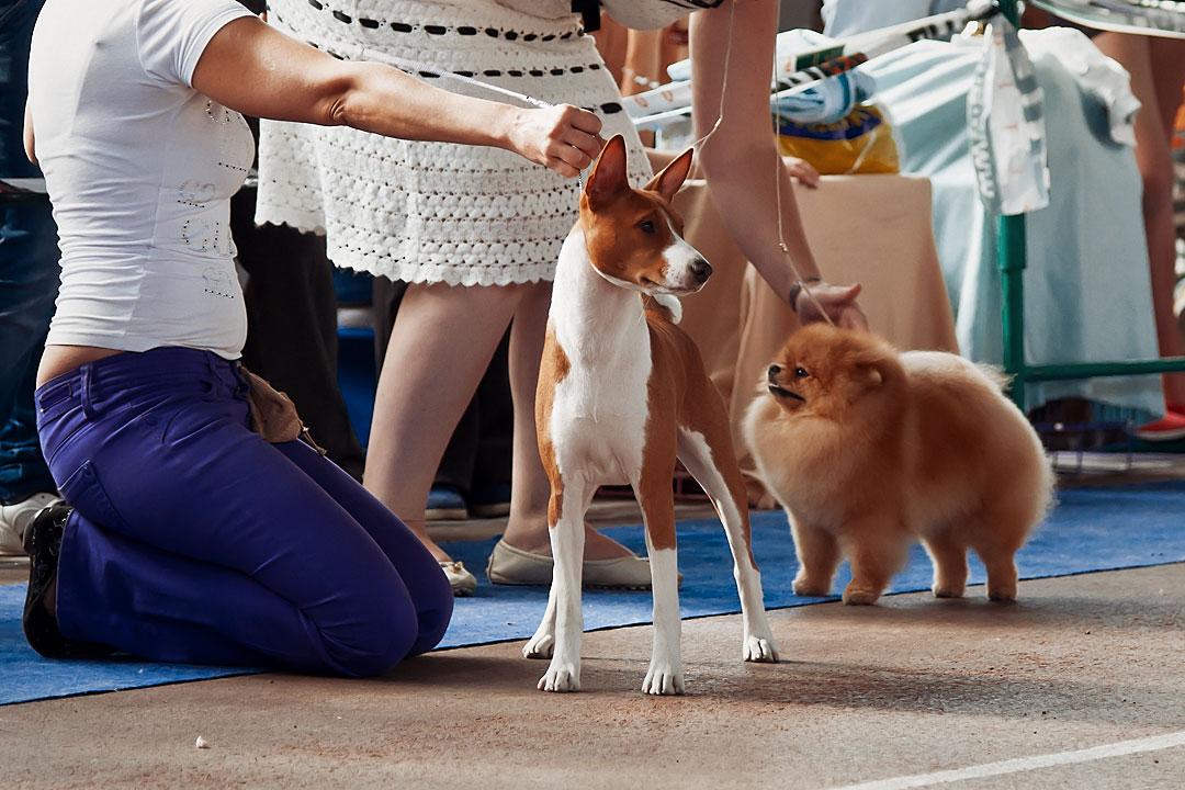 Международная выставка собак в Тирасполе - 8 сентября 2013 года (18)