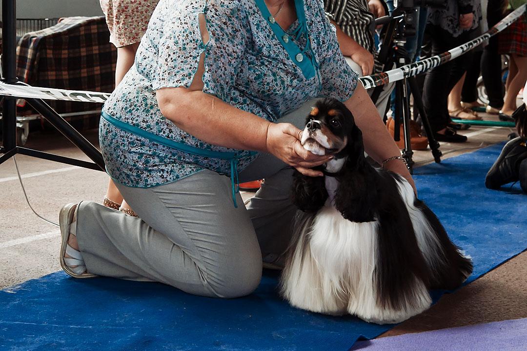 Международная выставка собак в Тирасполе - 8 сентября 2013 года (19)