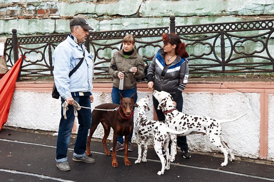 выставка собак в Тирасполе - 15 сентября 2013 года (2)