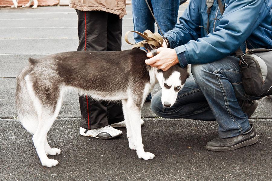 выставка собак в Тирасполе - 15 сентября 2013 года (10)