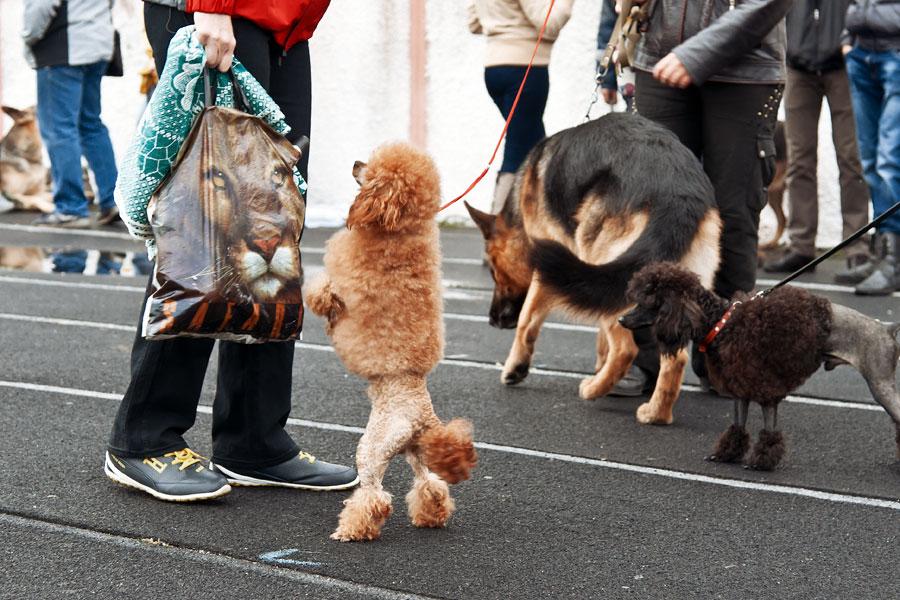 выставка собак в Тирасполе - 15 сентября 2013 года (18)