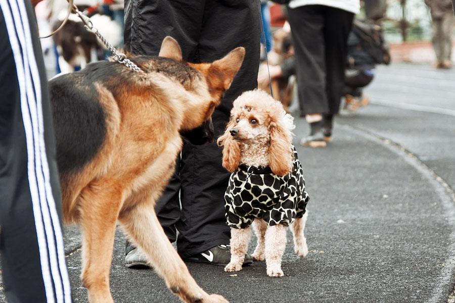 выставка собак в Тирасполе - 15 сентября 2013 года (20)