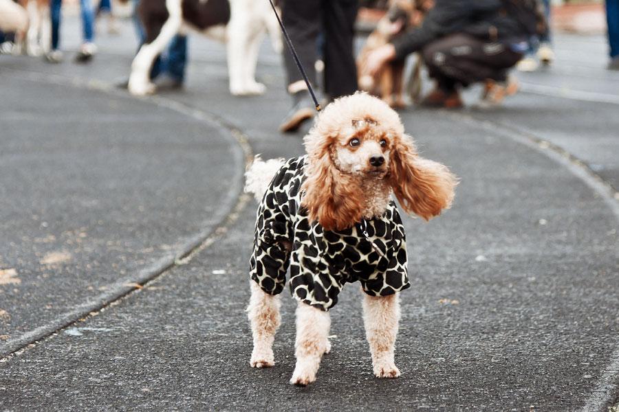 выставка собак в Тирасполе - 15 сентября 2013 года (21)