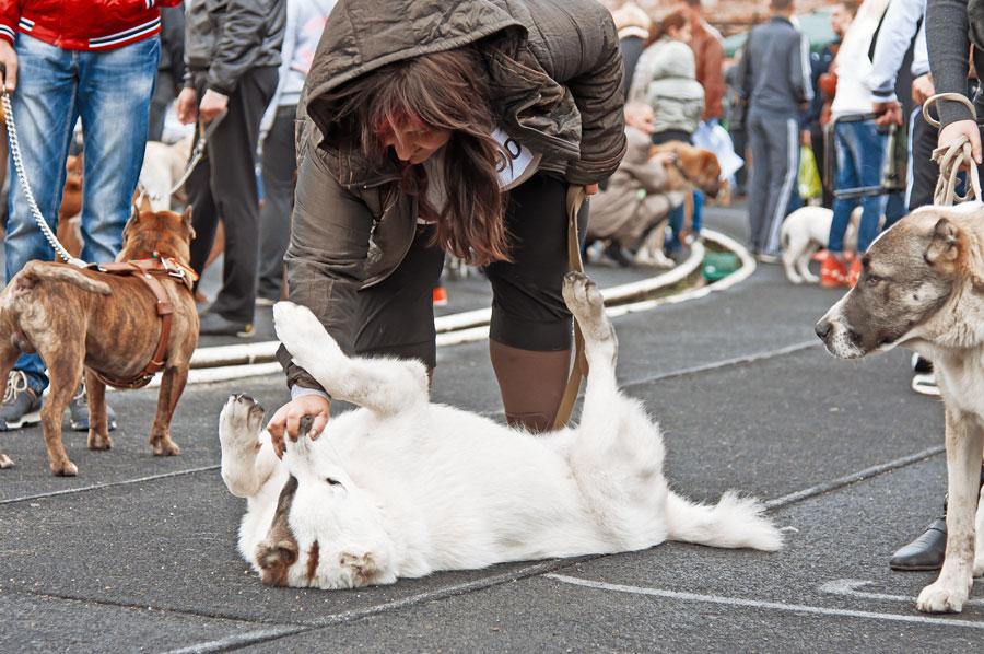 выставка собак в Тирасполе - 15 сентября 2013 года (22)