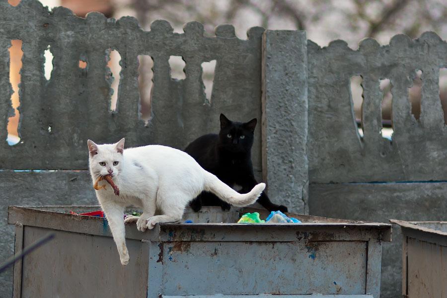 Кошки и собаки города Тирасполь (3)