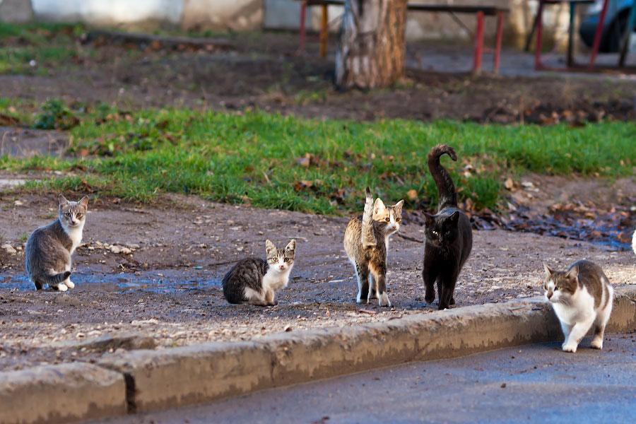 Кошки и собаки города Тирасполь (4)