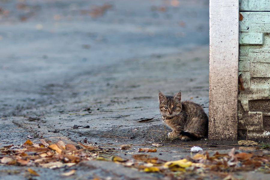 Кошки и собаки города Тирасполь (5)