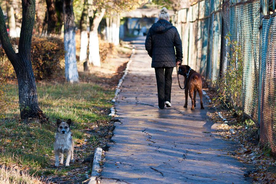 Кошки и собаки города Тирасполь (6)