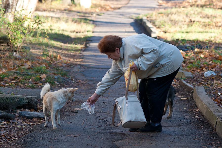 Кошки и собаки города Тирасполь (7)
