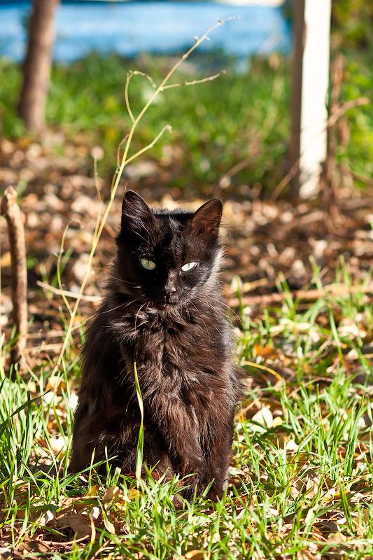 Кошки и собаки города Тирасполь (8)