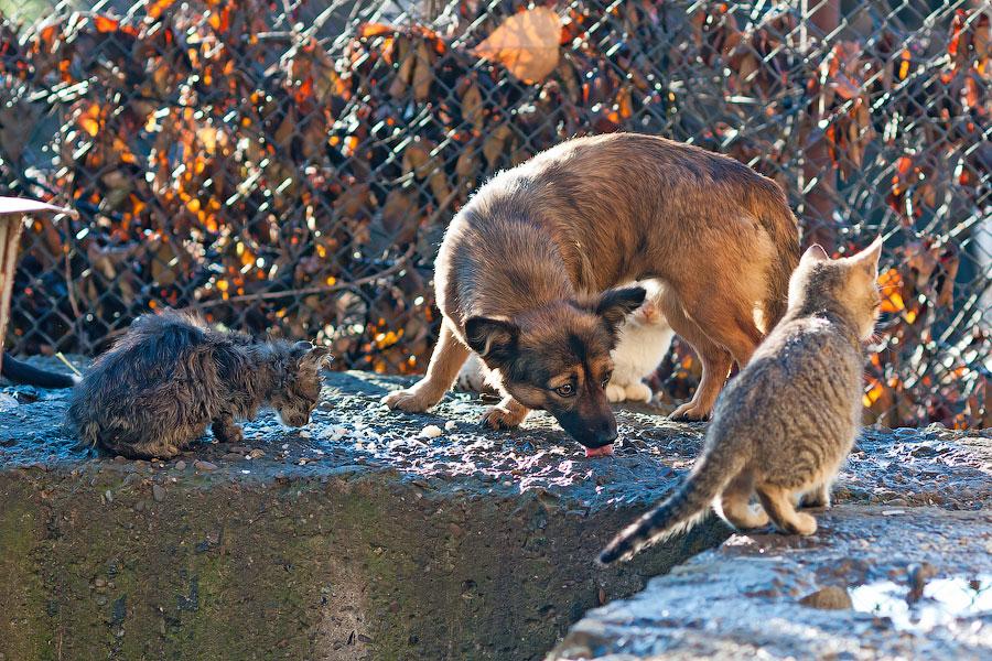 Кошки и собаки города Тирасполь (9)