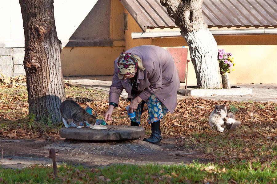 Кошки и собаки города Тирасполь (1)