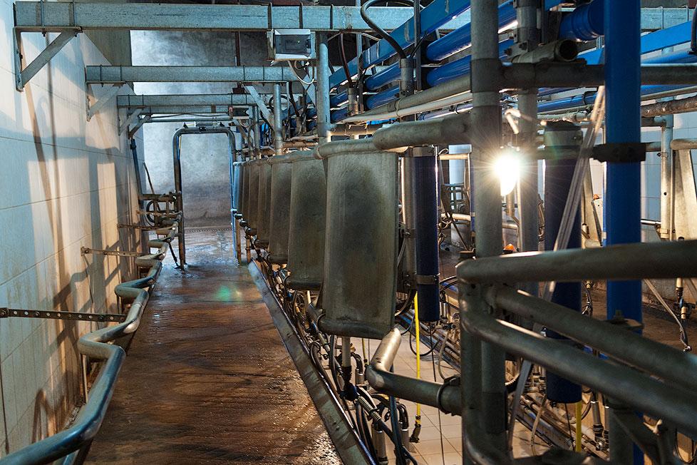 На Рыбницком молочном комбинате (1)