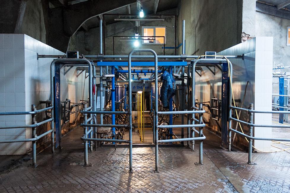 На Рыбницком молочном комбинате (39)